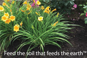 soilution