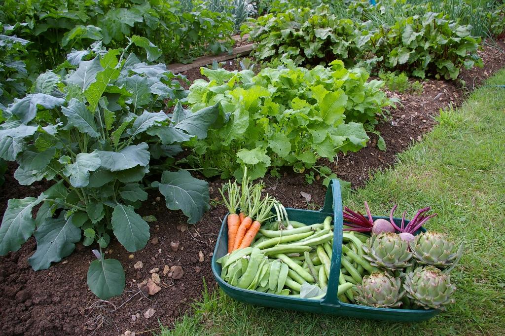 fruit trees  vegetable gardens  sweetpeet best mulch on earth, Garden idea
